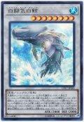 【ウルトラ】 白闘気白鯨