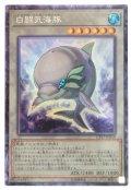 【コレクターズ】 白闘気海豚