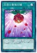 天啓の薔薇の鐘【ノー】