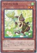 マタタビ仙狸【ノー】